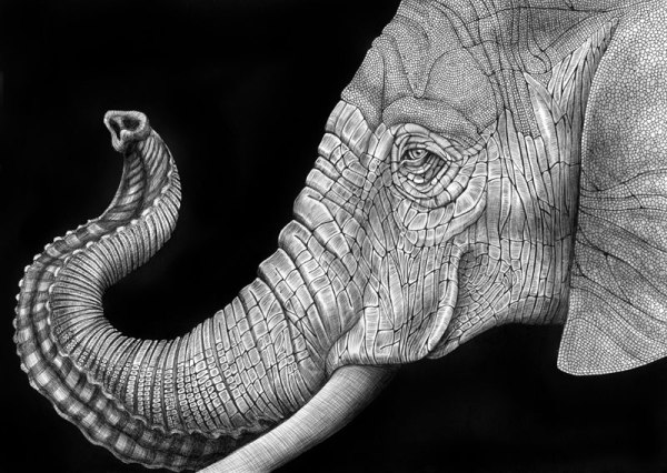 highly-detailed-pen-and-ink-animal-illustrations-by-tim-jeffs-9